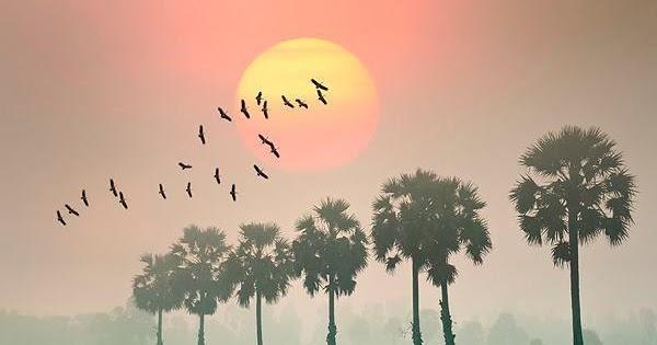 chat thep va chat tinh trong bai tho chieu toi cua ho chi minh 1 - Chất thép và chất tình trong bài thơ Chiều Tối của Hồ Chí Minh