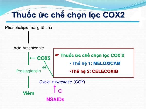 cox 2 la gi tat tan tat nhung thong tin ve thuoc cox 2 - Cox 2 là gì? Tất tần tật những thông tin về thuốc Cox 2