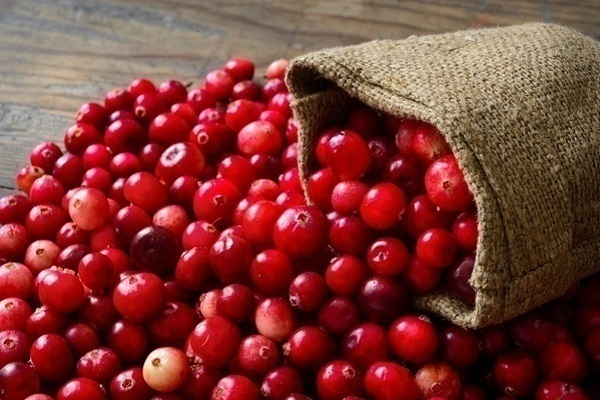 cranberry la qua gi nhung cong dung tuyet voi cua cranberry 2 - Cranberry là quả gì? Những công dụng tuyệt vời của Cranberry