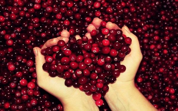 cranberry la qua gi nhung cong dung tuyet voi cua cranberry 4 - Cranberry là quả gì? Những công dụng tuyệt vời của Cranberry