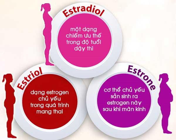 estrogen la gi tac dung cua estrogen doi voi phu nu 1 - Estrogen là gì? Tác dụng của Estrogen đối với phụ nữ