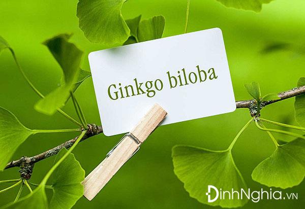 ginkgo biloba la thuoc gi tong hop nhung dieu can biet ve ginkgo biloba - Ginkgo Biloba là thuốc gì? Tổng hợp những điều cần biết về Ginkgo Biloba