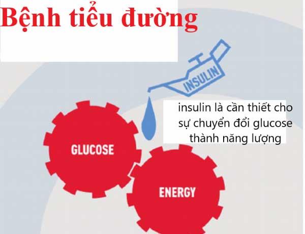 insulin la gi vai tro tac dung va lieu dung cua insulin 2 - Insulin là gì? Vai trò, Tác dụng và Liều dùng của Insulin