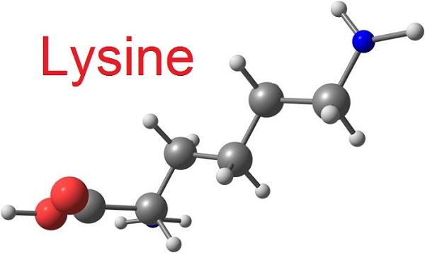 l lysine la gi tac dung lieu dung va cach bao quan l lysine 2 - L-Lysine là gì? Tác dụng, Liều dùng và Cách bảo quản L-Lysine