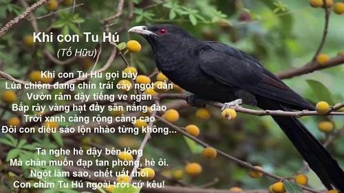 soan bai khi con tu hu cua tac gia to huu – ngu van 8 - Soạn bài Khi con tu hú của tác giả Tố Hữu – Ngữ Văn 8