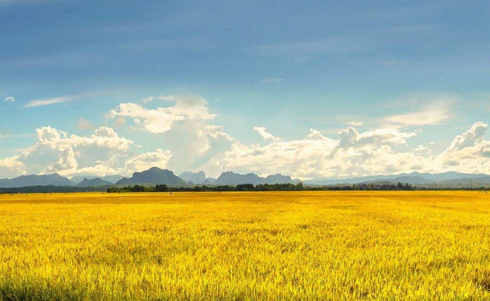 buoi sang tren canh dong lua - Tả cảnh buổi sáng trên cánh đồng lớp 5 hay nhất - 4 bài văn miêu tả buổi sáng cánh đồng lúa quê hương em