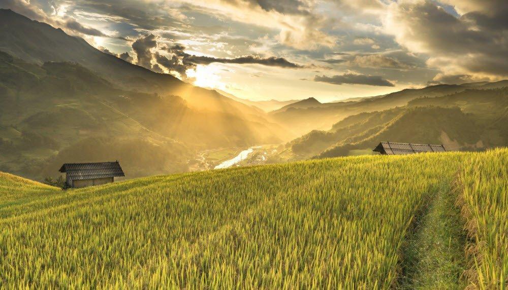 buoi sang tren canh dong que huong em - Tả cảnh buổi sáng trên cánh đồng lớp 5 hay nhất - 4 bài văn miêu tả buổi sáng cánh đồng lúa quê hương em