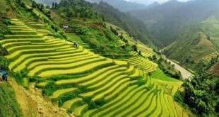 cam nhan ve loi nguoi o lai trong bai tho viet bac 310x165 - Cảm nhận về lời người ở lại trong bài thơ Việt Bắc