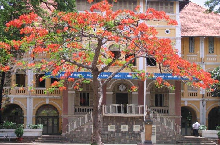 cay bong mat cay phuong vi - Tả cây bóng mát lớp 4 ngắn gọn - 3 bài văn miêu tả cây bàng cây phượng vĩ hay nhất
