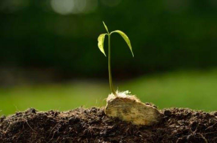 cay non moi trong cay xoai - Tả một cây non mới trồng lớp 5 - 4 bài văn miêu tả cây xoài non, cây bàng non, cây hoa hồng non
