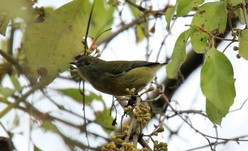 con chim sau - Tả con chim lớp 4 hay nhất - 3 bài văn ngắn miêu tả chim sẻ, chim sâu, chim sáo
