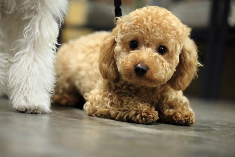 con cho de thuong - Tả con chó lớp 4 hay - 3 bài văn ngắn miêu tả con chó nhà em