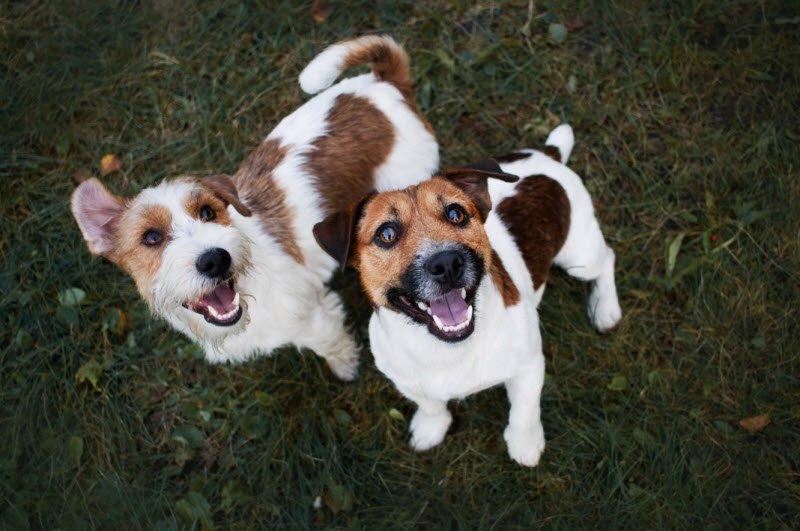 con cho lop 2 - Tả con chó lớp 2 ngắn gọn - 4 bài văn đoạn văn miêu tả con chó nhà em hay nhất