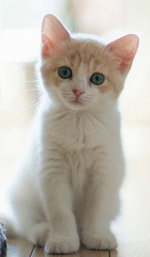 con meo de thuong - Tả con mèo lớp 5, bài văn miêu tả con mèo ngắn gọn hay nhất