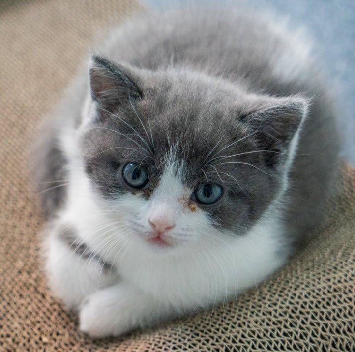 con meo - Tả con mèo lớp 2 hay nhất - 4 bài văn miêu tả con mèo nhà em ngắn gọn