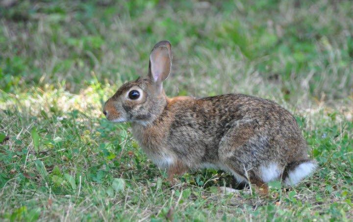 con tho 4 - Tả con thỏ lớp 4 hay nhất - 3 bài văn ngắn gon miêu tả thỏ bông nhà em trong vườn thú
