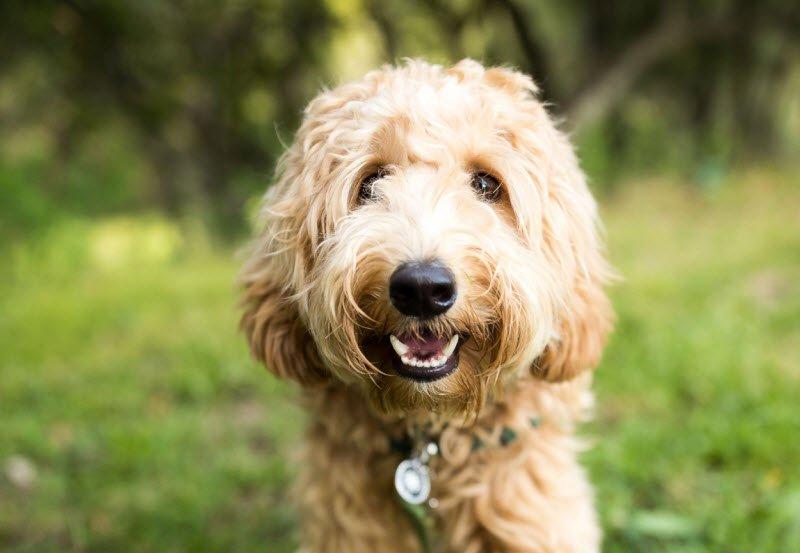 concho 1 - Tả con chó lớp 5 hay nhất - 4 bài văn mẫu miêu tả con chó nhà em ngắn gọn
