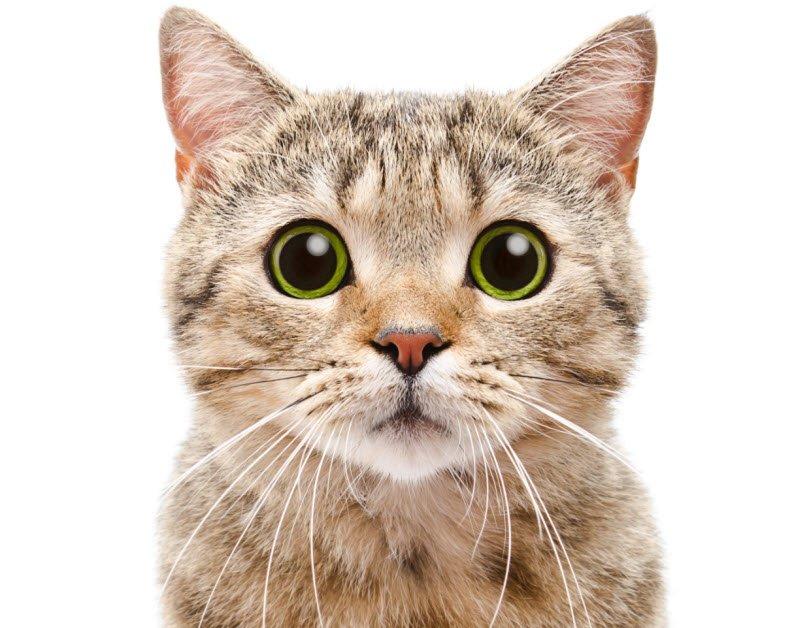 conmeo - Tả con mèo lớp 2 hay nhất - 4 bài văn miêu tả con mèo nhà em ngắn gọn