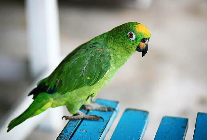 convet - Tả con vẹt lớp 2 hay - 4 đoạn văn ngắn miêu tả con vẹt