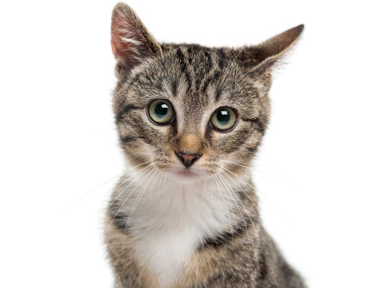 hinh anh con meo - Tả con mèo lớp 2 hay nhất - 4 bài văn miêu tả con mèo nhà em ngắn gọn