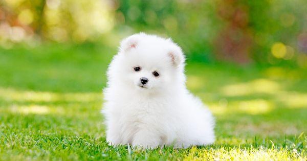 hinh anh van mau mieu ta con cho bang tieng trung 2 - Văn mẫu tiếng Trung: miêu tả con chó bằng tiếng Trung