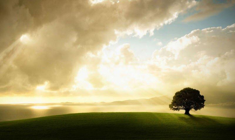khiem ton - Nghị luận về lòng khiêm tốn - 3 bài văn NLXH về đức tính khiêm tốn khiêm nhường giản dị ngắn gọn hay nhất