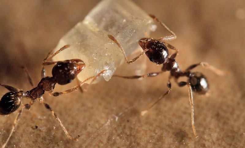 kien tha moi - Tả đàn kiến đang đi kiếm ăn, kiến tha mồi về tổ lớp 4 hay nhất 2 bài văn ngắn gọn