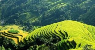 loi hoi dap cua nguoi ve xuoi trong bai tho viet bac 310x165 - Lời hồi đáp của người về xuôi trong bài thơ Việt Bắc