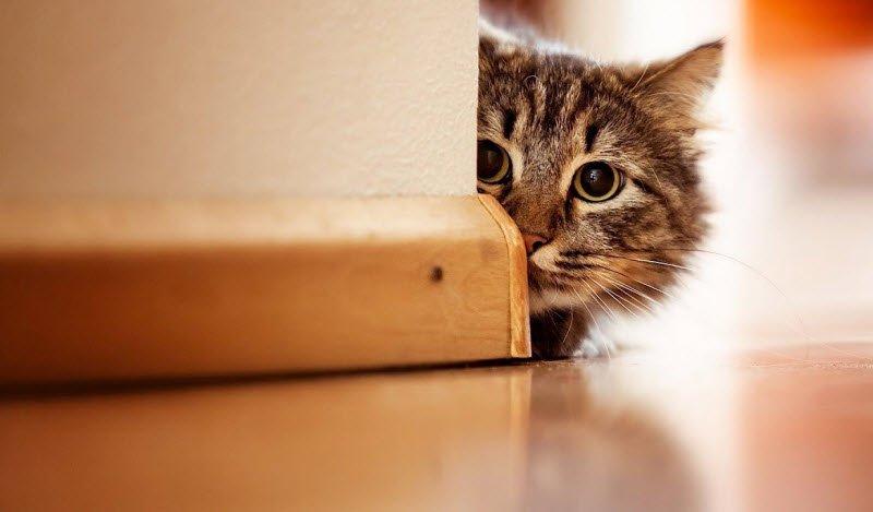 meo hanh dong de thuoung - Tả con mèo lớp 2 hay nhất - 4 bài văn miêu tả con mèo nhà em ngắn gọn