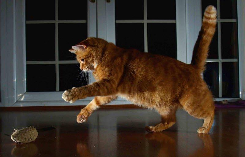 meo - Tả con mèo lớp 2 hay nhất - 4 bài văn miêu tả con mèo nhà em ngắn gọn