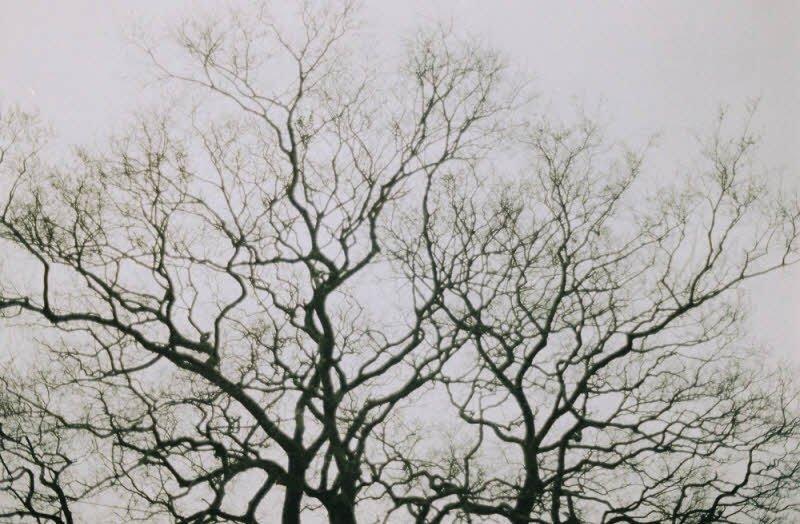 muaddong - 4 đoạn văn Tả mùa đông lớp ngắn gọn hay nhất