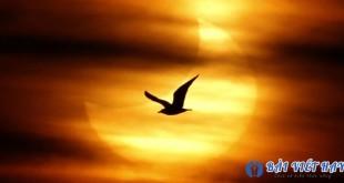 phan tich su hoa quyen giua ve dep co dien va hien dai trong bai tho chieu 310x165 - Phân tích sự hòa quyện giữa vẻ đẹp cổ điển và hiện đại trong bài thơ Chiều tối của Hồ Chí Minh