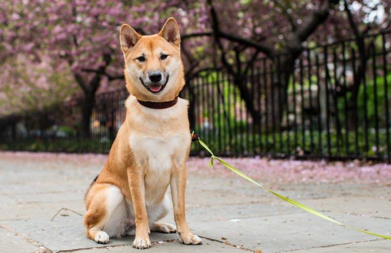 ta con cho - Tả con chó lớp 5 hay nhất - 4 bài văn mẫu miêu tả con chó nhà em ngắn gọn