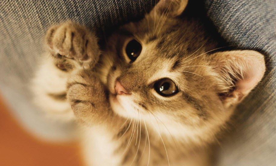 ta con meo - Tả con mèo lớp 5, bài văn miêu tả con mèo ngắn gọn hay nhất