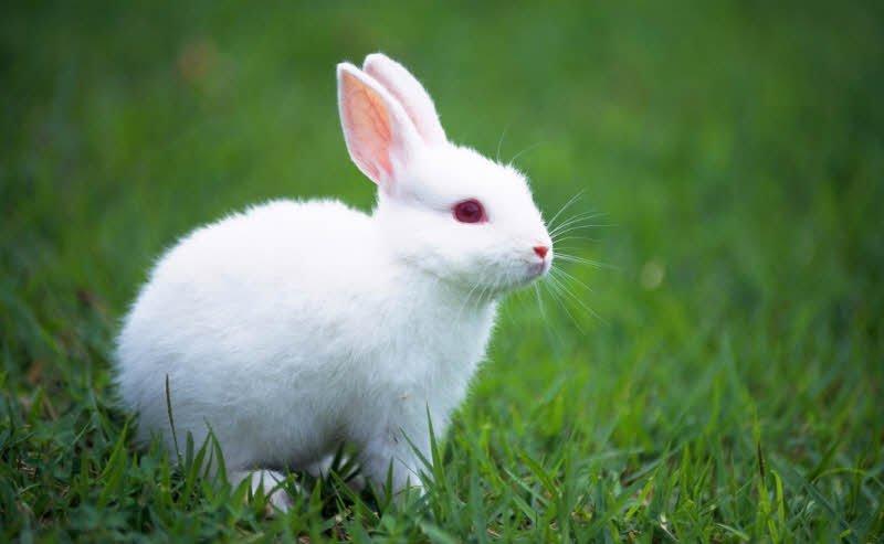 ta con tho - Tả con thỏ lớp 2 hay - 4 đoạn văn ngắn miêu tả con thỏ