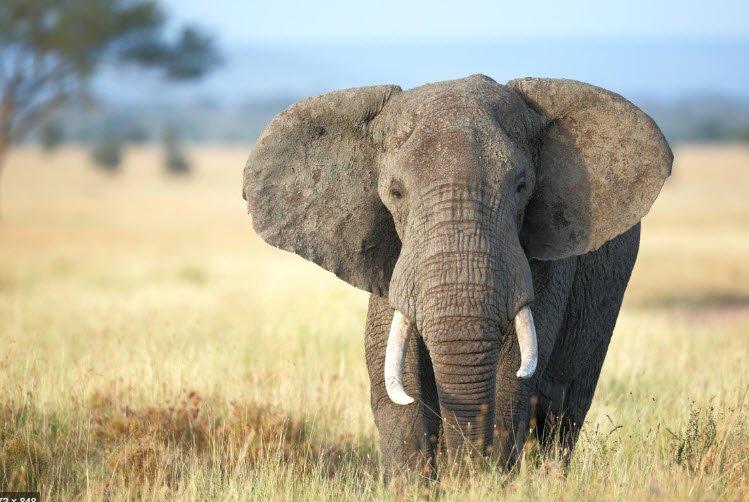 ta con vat yeu thich con voi - Tả con vật mà em yêu thích nhất lớp 5 - Bài văn miêu tả con mèo, con chó, con voi, con gà