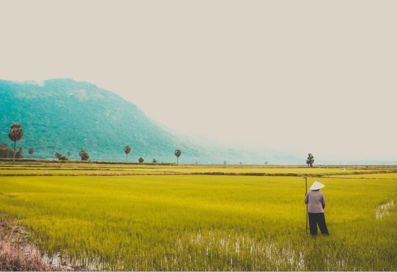 ta nguoi lao dong dang lam viec bac nong dan 1 - Tả một người lao động đang làm việc - 3 bài văn miêu tả bác nông dân, anh công nhân, chú cảnh sát ngắn gọn hay nhất