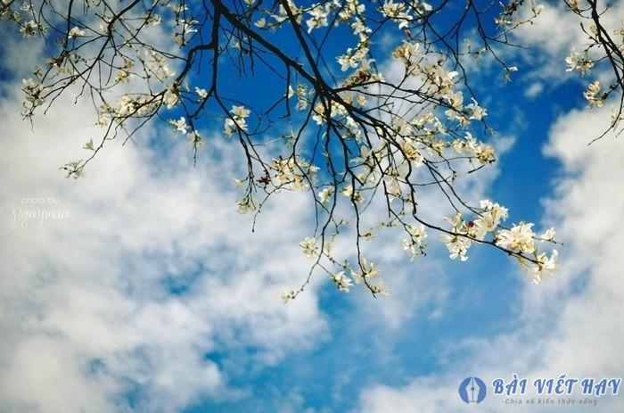 top 10 bai van mau ta canh mua xuan tren que huong em hay nhat 2 - Top 10 bài văn mẫu tả cảnh mùa xuân trên quê hương em hay nhất