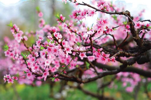 top 10 bai van mau ta canh mua xuan tren que huong em hay nhat - Top 10 bài văn mẫu tả cảnh mùa xuân trên quê hương em hay nhất