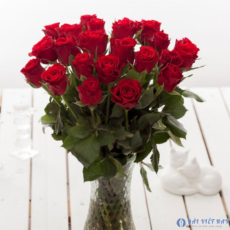 top 10 bai van mau ta cay hoa hong moi nhat 4 - Top 10 bài văn mẫu tả cây hoa hồng mới nhất