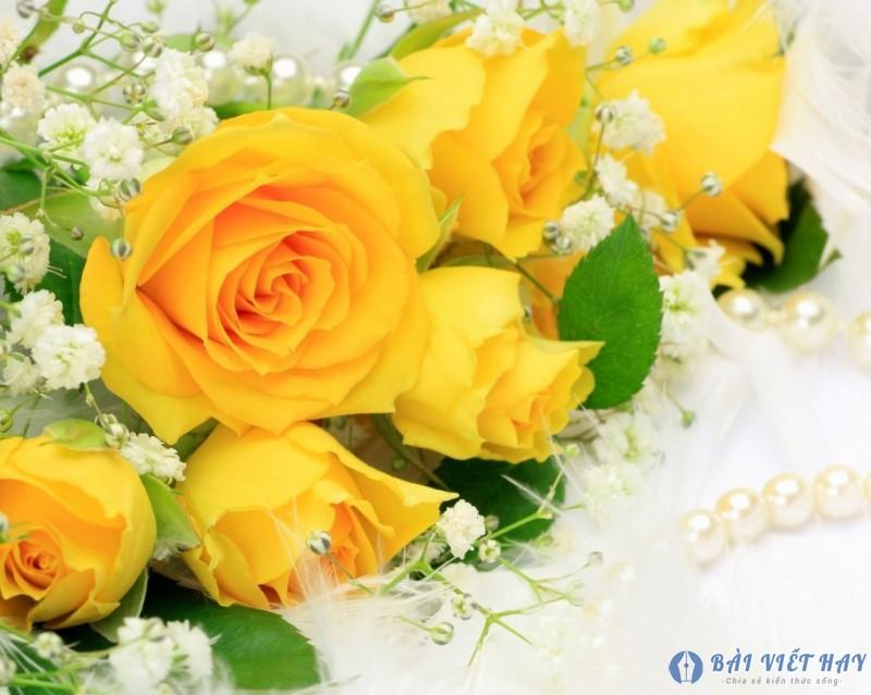 top 10 bai van mau ta cay hoa hong moi nhat 9 - Top 10 bài văn mẫu tả cây hoa hồng mới nhất