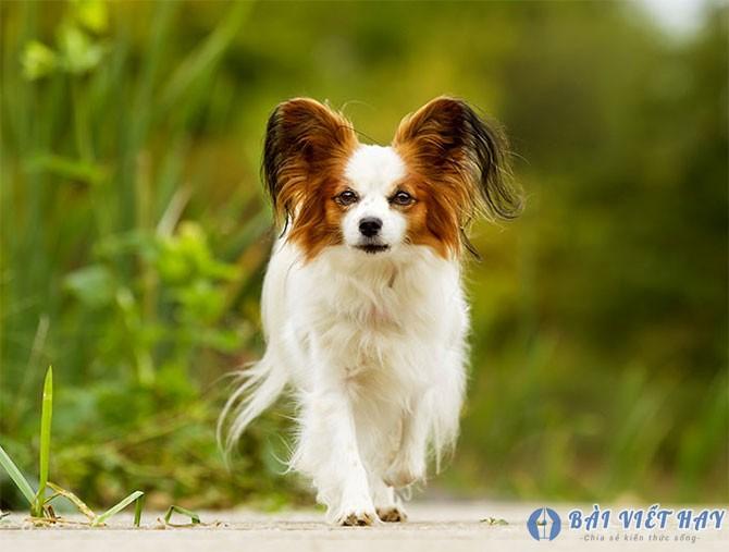 top 10 bai van mau ta con cho nha em dat diem cao moi nhat 1 - Top 10 bài văn mẫu tả con chó nhà em đạt điểm cao mới nhất