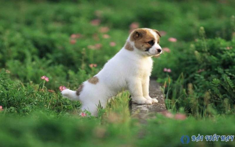 top 10 bai van mau ta con cho nha em dat diem cao moi nhat 3 - Top 10 bài văn mẫu tả con chó nhà em đạt điểm cao mới nhất