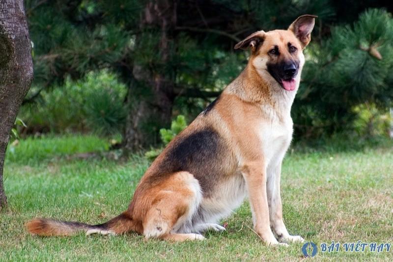 top 10 bai van mau ta con cho nha em dat diem cao moi nhat 4 - Top 10 bài văn mẫu tả con chó nhà em đạt điểm cao mới nhất