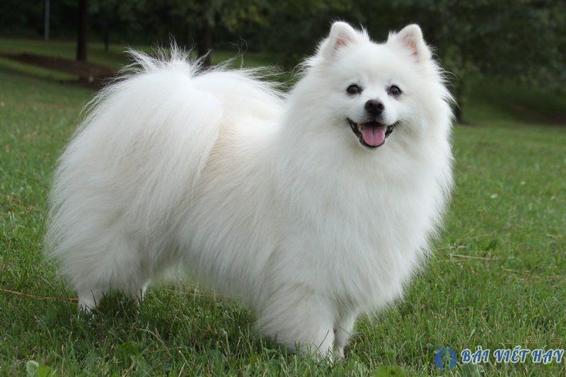 top 10 bai van mau ta con cho nha em dat diem cao moi nhat 5 - Top 10 bài văn mẫu tả con chó nhà em đạt điểm cao mới nhất