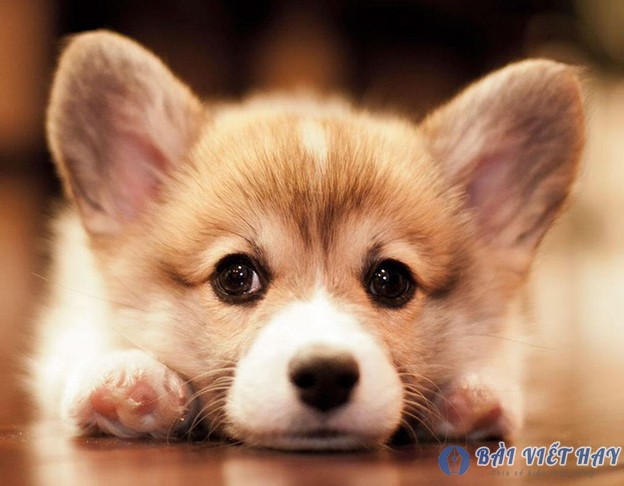 top 10 bai van mau ta con cho nha em dat diem cao moi nhat 7 - Top 10 bài văn mẫu tả con chó nhà em đạt điểm cao mới nhất