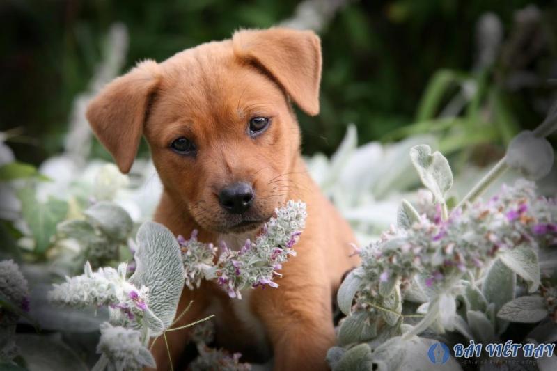 top 10 bai van mau ta con cho nha em dat diem cao moi nhat 9 - Top 10 bài văn mẫu tả con chó nhà em đạt điểm cao mới nhất