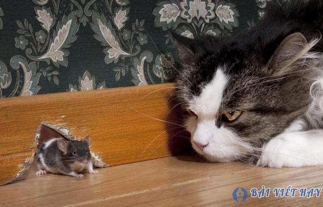 top 10 bai van mau ta con meo dat diem cao moi nhat 1 - Top 10 bài văn mẫu tả con mèo đạt điểm cao mới nhất