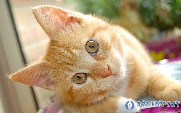 top 10 bai van mau ta con meo dat diem cao moi nhat 2 - Top 10 bài văn mẫu tả con mèo đạt điểm cao mới nhất