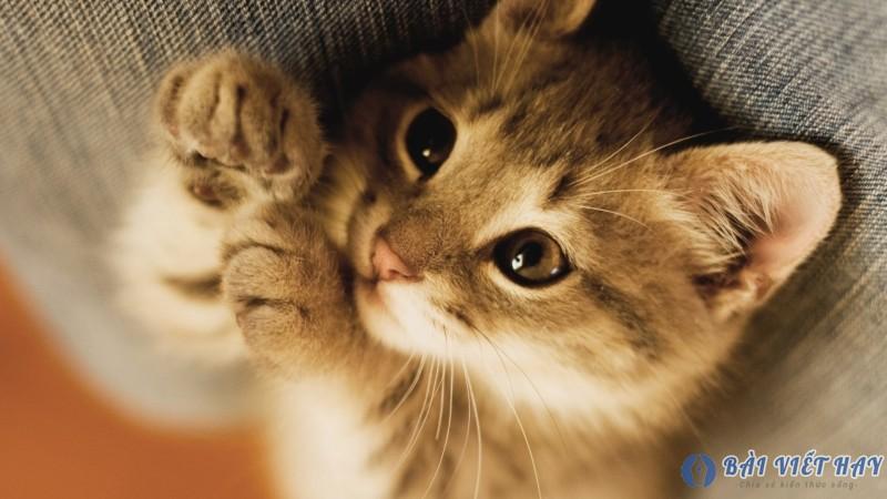 top 10 bai van mau ta con meo dat diem cao moi nhat 3 - Top 10 bài văn mẫu tả con mèo đạt điểm cao mới nhất